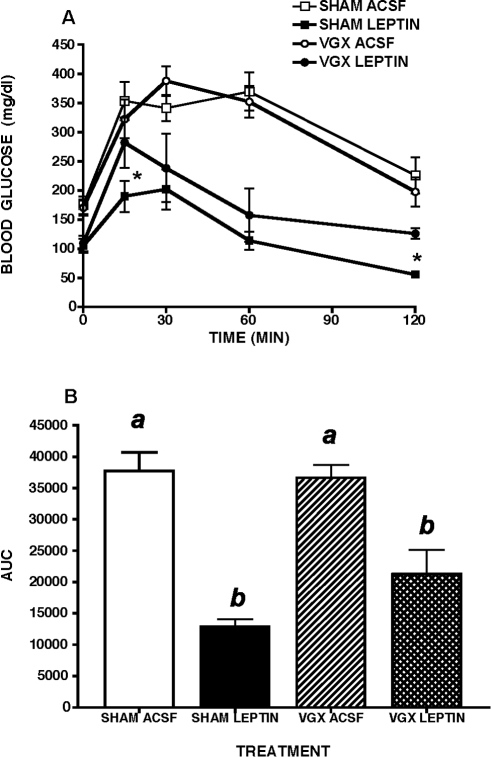 Glucose tolerance in leptin-treated MKR mice with or without hepatic vagotomy.Selective hepatic branch vagotomy (VGX) partially reversed the ability of two week third intracerebroventricular leptin treatment to improve glucose tolerance in male MKR mice, relative to artificial cerebrospinal fluid (ACSF) vehicle treated controls. SHAM  =  sham surgical treatment. A. Intraperitoneal glucose tolerance (ipGTT, 2 g/kg), * p<0.05, B. Area under the curve (AUC) during ipGTT. All data presented as means ± SEM, N = 6–7/group. Different superscript letters indicate significant differences at p< 0.05. * p<0.05.