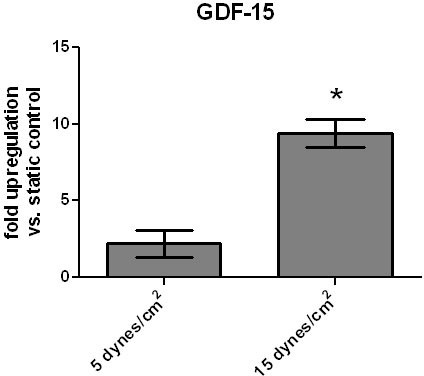 Upregulation of GDF-15 by shear stress. Human pulmonary microvascular endothelial cells (HPMEC) were exposed to laminar fluid flow (5 and 15 dynes/cm2) for 6 h. Expression of GDF-15 mRNA was assessed by quantitative RT-PCR. Data are presented as relative expression of GDF-15 mRNA normalized to two housekeeping genes (β-GUS and β-actin). Data from n = 5 each group are shown as mean ± SD. * = p < 0.05 compared to static control (0 dynes/cm2).
