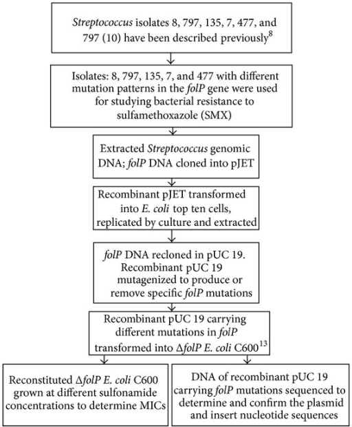 Flow Chart Showing Characterization Of Folp Gene Plasm Open I