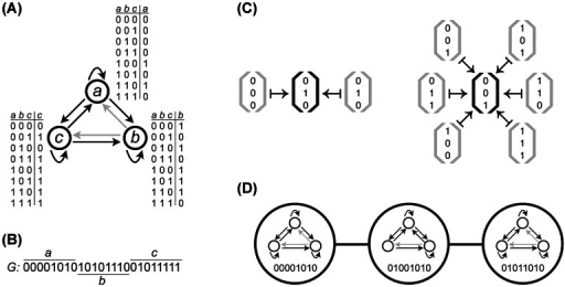 "Schematic illustration of the Boolean model of gene regulatory circuits.(A) A Boolean circuit with  genes (a,b,c), which are represented as open circles. Two genes are connected by a directed edge  if the expression of gene b is regulated by the product of gene a. Gene expression is binary, such that genes are either expressed (1) or not (0). The signal-integration logic of each gene is shown as a lookup table that explicitly maps all  possible input expression states to an output expression state, implicitly determining the circuit's topology. In the hypothetical circuit shown, the expression state of gene a is independent of the expression state of gene b, so  is a non-existing regulatory interaction (gray arrow), whereas  and  are both existing regulatory interactions (black arrows). (B) The wiring diagram and signal-integration logic of the entire circuit can be represented by a single vector G that is constructed by concatenating the rightmost columns of the lookup tables of the individual genes in panel (A). The vector G corresponds to the circuit's genotype. (C) The circuit in (A) maps all of the  possible initial states  (gray brackets) onto two distinct stable equilibrium expression states  (black brackets). This circuit therefore can have up to  functions, and can express such a ""bifunction"" in  different ways, since 6 initial states map to one equilibrium expression state and the other 2 initial states map to another equilibrium expression state. (D) In a genotype network, vertices represent circuits and two vertices share an edge if the genotypes G differ by a single element, yet have the same functions. Here, the genotype network corresponds to circuits with the bifunction , . For visual clarity, each circle only shows the first 8 binary digits of G, which represent the signal-integration logic of gene a. Note how changes in G may implicitly translate to changes in circuit topology."