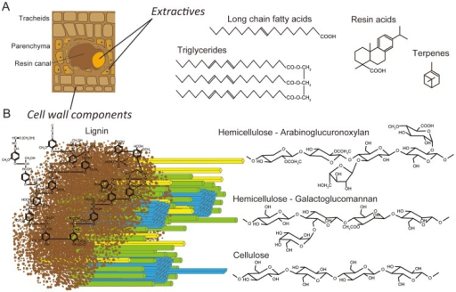 Schematic representations of lignocellulose components in cell walls of pine wood.Panel A: The extractives (long chain fatty acids, triglycerides, resin acids and terpenes) are found primarily in the resin ducts, but damage to pine wood causes the release of these compounds across wounded areas. Panel B: In tracheid cell walls, the amorphous, phenylpropanoid polymer lignin (brown) form a matrix around the more structured carbohydrate polymers, hemicellulose (yellow and green) and cellulose (blue).