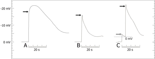 Amplitudes of the extracellular measurements.Style released by artificially deflecting the trigger appendage (A, B) or by applying a chloroform droplet (C) in Donax canniformis and Goeppertia bachemiana. The left border of the time bar (20 s) indicates the stimulus (to); black arrows, apoplastic voltage change after 0.5 s; white arrow, pre-peak (only observed in chemical experiments). In C the style is released after the pre-peak drops, the corresponding ΔV-value was corrected (dotted line).