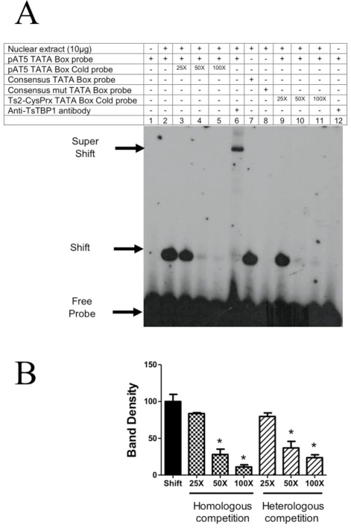 Electrophoretic mobility shift assay showing the interaction of wild type TsTBP1 pAT5 TATA-box probe.A) Lane 1: Labeled dsDNA-32P probe without nuclear extract; lane 2: TsTBP1-pAT5 TATA-box interaction with T. solium nuclear extract; lanes 3, 4, and 5: competence with pAT5 TATA-box cold probe in a molar excess of 25X, 50X, and 100X, respectively; lane 6: super-shift interaction using anti-pTsTBP1-N; lane 7: consensus TATA-box probe interaction with T. solium nuclear extract (used as positive control); lane 8: consensus mutated TATA-box probe interaction with nuclear extract (used as negative control); lane 9, 10 and 11: cross-competence with Ts2-CysPrx TATA-box cold probe in a molar excess of 25X, 50X, and 100X, respectively; lane 12: anti-TsTBP1-N antibody without T. solium nuclear extract (negative control). Shifted, super-shifted bands and the free-labeled dsDNA probe, are indicated by arrows. B) Densitometric analysis shows a decrease on the intensity of shifted bands in homologous and heterologous competition. Results are present as percentage mean ± SD of the shifted band in lane 2 (P < 0.005).