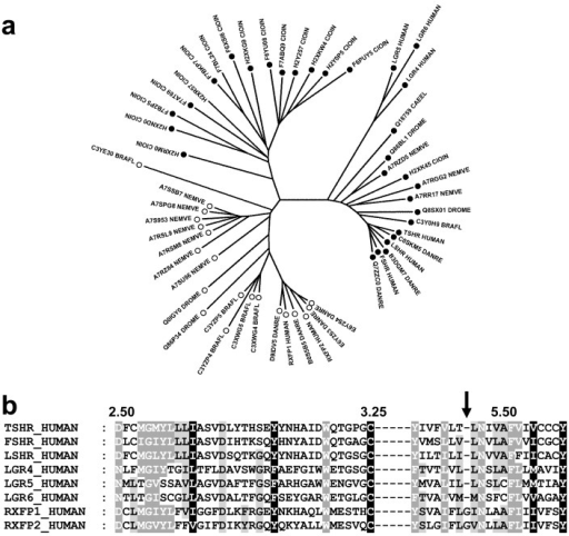 Evolution of LGR receptors.(a) NJ tree of 52 LGR receptors from seven species. The Y5.38 and Y5.39 patterns are indicated by an open and a closed symbol, respectively. (b) Sequence alignment of residues 2.50 to 3.25 and residues 5.38 to 5.58 of the human LGR receptors. The shading corresponds to the alignment of the 52 sequences. Fully conserved positions are shaded in black, partially conserved or type-conserved positions are shaded in dark grey (80% conservation) or light grey (60% conservation).