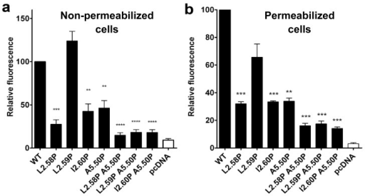Expression of the TSHR mutants.(a) Cell surface expression and (b) total cell expression of WT and mutated TSHRs, given as the percentage of the wild type control, after transfection of HEK-293 cells by the same amount of TSHR coding pcDNA3.1 plasmid. Receptor expression was determined by flow cytometry measurements of intact (a) or permeabilized cells (b). The histograms represent the mean ± SEM of at least 3 independent experiments, each carried out in triplicates.