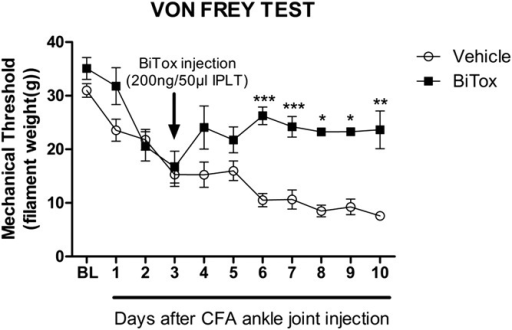 BiTox reduced secondary plantar mechanical hyperalgesia after CFA injection into the ankle. BiTox (200 ng) or vehicle were injected IPLT 3 days after CFA injection into the ankle joint. The mechanical withdrawal threshold was measured with von Frey filaments before treatment as a basal pain threshold (BL) and for 10 days. Intraplantar injection of BiTox attenuated plantar mechanical hypersensitivity after CFA intra-ankle joint injection. Data are presented as means ± SEM, *P < 0.05, **P < 0.01, ***P < 0.001. n = 6 to 8 animals per group.