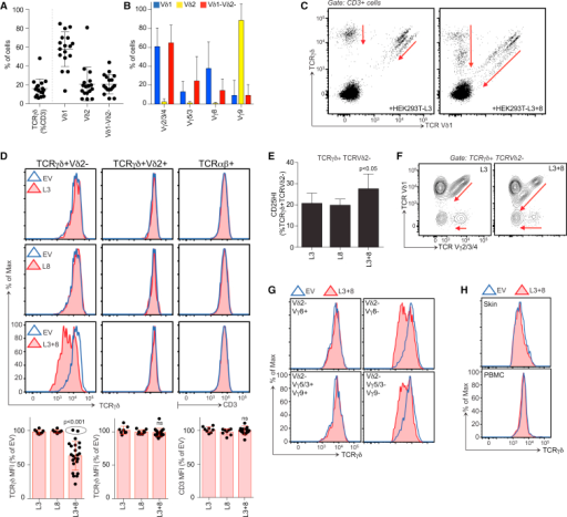 Regulation of Human Gut Vγ4+ Cells by BTNL3 and BTNL8(A and B) Vδ (A, n = 17) and Vγ (B, n = 6–10) expression by human gut γδ cells.(C) Surface TCRγδ/Vδ1 expression on human gut lymphocytes after 12-hr co-culture with BTNL3 (L3) or BTNL3 plus BTNL8 (L3+8)-transduced HEK293T cells. Red arrows denote shifts in TCR staining.(D) Top: TCRγδ/CD3 expression on designated human gut T cells after 12-hr co-culture with denoted HEK293T transductants. Bottom: mean fluorescence intensities (MFIs) calculated relative to co-culture with HEK293T.EV (n ≥ 22). For two donors, MFIs for Vδ2− cells remained unchanged (dots within the ellipse).(E) Percentage of CD25HI cells among TCRγδ+TCRVδ2− T cells after co-culture with denoted cells (n = 5). Statistical analysis was performed by paired t test.(F) Surface Vγ2/3/4 and Vδ1 expression on Vδ2− γδ T cells after co-culture with cells denoted.(G) TCRγδ expression on indicated subsets after co-culture with denoted cells.(H) TCRγδ expression on γδ cells from peripheral blood mononuclear cells (PBMCs) or skin after co-culture with denoted cells.All error bars represent mean ± SD. See also Figure S7 and Table S1.