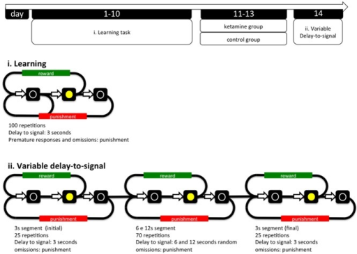 General organization of the experiment and operational diagrams of the VDS and preceding training protocol. The VDS consisted in two parts: the training protocol (10 sessions) and the VDS proper (1 session); while in the first the delay-to-signal was fixed (3 s) and pre-signal nose pokes were punished (TO), in the VDS proper, 2 blocks of 25 trials at 3 s delay were interposed by a block of 70 trials at 6 s and 12 s, pre-signal responses were registered but not punished with a TO. In both training and VDS the signal duration was set to a maximum of 60 s; the absence of a response within this period was registered as an omission. TO, timeout; VDS, variable delay-to-signal task.