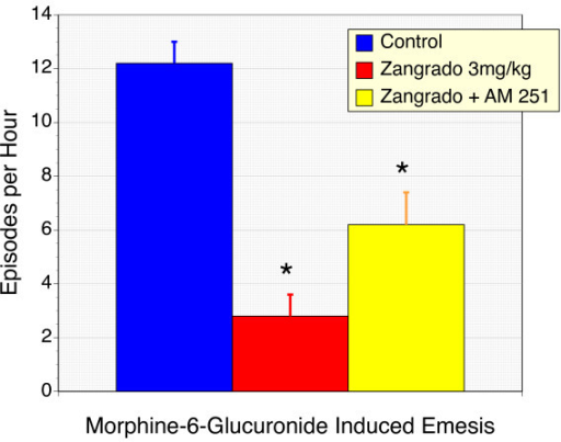 Suppression of morphine-6-glucuronide-induced vomiting and retching in ferrets with Zangrado, and the effects of CB1 receptor antagonism with AM 251. Ferrets treated with the opioid narcotic, morphine-6-glucuronide (M6G) display a substantial emetic response with on average over 12 episodes per hour. Zangrado administration (3 mg/kg ip) 15 minutes prior to M6G resulted in a 77% reduction in emetic episodes (n = 6, P < 0.01). Co-administration of Zangrado with the CB receptor antagonist, AM 251 (5 mg/kg, ip) failed to reverse the anti-emetic effects of Zangrado (n = 6). The slight increase in emetic episodes with AM 251 is comparable to that seen with ferrets treated with AM 251 alone and is thought to reflect the anti-emetic effects of endogenous cannabinoids [20,21].