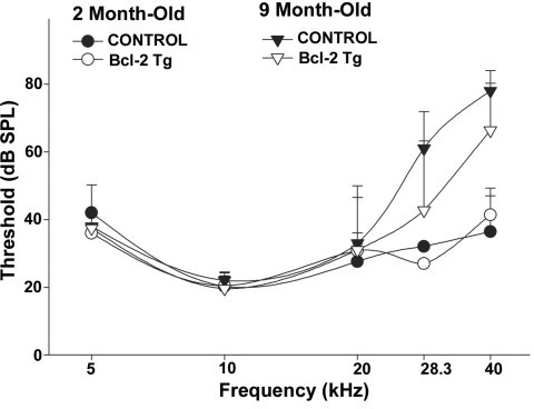 Comparison of age-related hearing loss between wild-type and bcl-2 transgenic mice. Mean (+SD) ABR thresholds were measured in wild type and BCL-2 transgenic mice versus age (2 and 9 months) and stimulus frequency. Five female mice were used for each group. No significant threshold protection effect of the BCL-2 transgene was apparent.