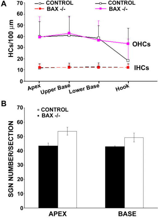 Comparison of age-related loss of hair cells and SGNs between wild-type and Bax-/- mice. (A) Mean (+SD) inner and outer hair cell density at four basal-apical locations from the same mice tested in Figure 5. (B) Comparison of SGN numbers between wild-type and Bax-/- mice. The number of SGNs were counted and compared at both the apex and base region from the same 5 month-old mice.