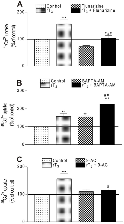 Involvement of ionic channels and intracellular calcium on stimulatory effect of rT3 on 45Ca2+ uptake.(A) Influence of flunarizine, (B) BAPTA-AM and (C) 9-AC on stimulatory effect of rT3 on 45Ca2+ uptake in Sertoli cells. Pre-incubation: 15 min in KRb, additional pre-incubation: 60 min with 0.1 µCi/mL of 45Ca2+ and incubation time: 60 s with 0.1 µCi/mL of 45Ca2+ in the presence or absence of flunarizine (1 µM), BAPTA-AM (50 µM) and 9-AC (1 µM) with/without rT3 (10-17 M). Means ± S.E.M. For control, n=10; rT3, n=7; flunarizine, n=8; rT3 + flunarizine, n=8; BAPTA-AM, n=8; rT3 + BAPTA-AM, n=6; 9-AC, n=6; rT3 + 9-AC, n=6. ***P < 0.001 and **p < 0.01 compared with control group; ###p < 0.001; ##p < 0.01 and #p < 0.05 compared with rT3 group.