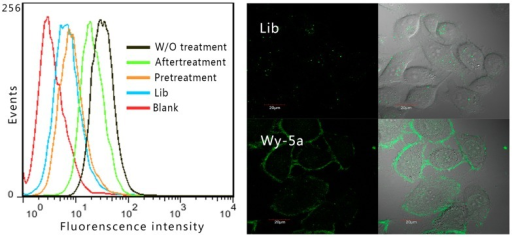 Cell-specific internalization of aptamer Wy-5a assessed by flow cytometry assay (left) and confocal imaging (right).W/O treatment: Cells were incubated with Wy-5a; Pretreatment: cells were pretreated by trypsin and then incubated Wy-5a; aftertreatment: cells were incubated Wy-5a and then treated by trypsin; Lib: negtive control, cells were incubated with FITC-labeled DNA library; blank: is the background fluorescence of untreated cells.