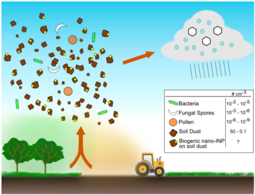 Illustration of the hypothesis that nanometre-scaled INPs of biological origin may become lofted to the atmosphere in association with soil dust particles and impact cloud glaciation.Nano-INPs associated with soil dust particulates could potentially greatly outnumber intact bioaerosol particles such as pollen, fungal spores and bacteria and therefore be much more important for ice nucleation in clouds, but are not presently represented in models. The quoted particle concentrations are zonal annual means from the simulations of Hoose et al.45 for an altitude corresponding to 600 hPa.