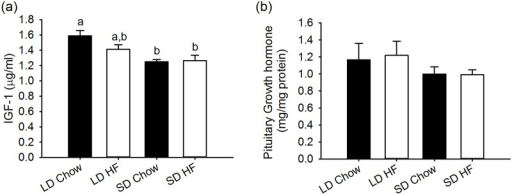 Effect of photoperiod and high fat diet (HFD) on serum IGF-1 and pituitary growth hormone (GH) levels in juvenile F344 rats after, 4 weeks of treatment.(a) IGF-1 levels in serum were lower in SD chow and HFD fed rats than LD chow fed while LD HFD fed rats were not significantly different. (b) Growth hormone levels in the pituitary were unaffected by either photoperiod or HFD.