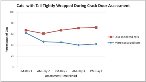 Percentage of More Socialized and Less Socialized cats with tails tightly wrapped during the Crack Cage Door assessment across different time periods.
