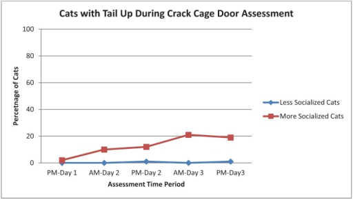 Percentage of More Socialized and Less Socialized cats with tails up during the Crack Cage Door assessment across different time periods.