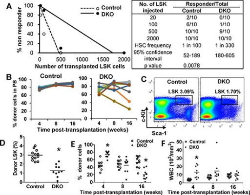 Cbl/Cbl-b DKO HSCs show impaired in vivo reconstitution ability(A) HSC limiting-dilution transplantation. Indicated numbers of LSKs were transplanted and mice with < 0.5% donor-derived chimerism at 16 weeks were considered non-responders. Data from two experiments are pooled. (B) 2000 LSKs were transplanted and donor-cell chimerism in PB analyzed at the indicated times. Data from two experiments are pooled. (C–D) Donor LSK pool was analyzed in recipient BM at around 20 weeks. Representative FACS plot (C) and quantitation (D) are shown only for recipients with > 70% donor cell reconstitution. Data from three experiments are pooled. (E–F) Secondary transplants with 2000 donor LSKs sorted from primary recipients transplanted 20 weeks earlier. Donor cell chimerism in PB (G) and WBC counts (H) over time are shown. Data from two repeats are pooled (*p < 0.05).