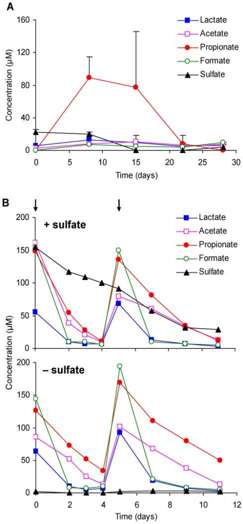 Substrate and sulfate measurements during pre-incubation and 12C-substrate turnover determinations. (A) Monitoring of indigenous substrate and sulfate concentrations during 4 weeks of pre-incubation of anoxic non-amended peat soil slurries. Averages ± SD are shown (n=6). (B) Time course of 12C-substrate turnover in anoxic peat soil slurries in the presence and absence of sulfate. Arrows indicate the time points of substrate additions; sulfate was added only once at the beginning of the experiment. Data points represent average values of three independent soil slurries; standard deviation bars were omitted for better visibility.