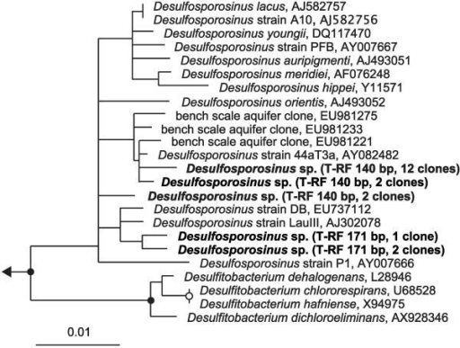 Phylogenetic consensus tree of 16S rRNA gene clones affiliated to the genus Desulfosporosinus (marked in bold). Clones were grouped according to ≥99% sequence identity; representing T-RFs and number of clones per group are indicated. With one exception, all Desulfosporosinus clones have a 16S rRNA sequence identity of >97% to each other. Parsimony bootstrap values for branches are indicated by solid circles (>90%) and open circles (75 to 90%). GenBank accession numbers of published 16S rRNA gene sequences are indicated behind the name of the respective sequences. The bar represents 1% estimated sequence divergence as inferred from distance matrix analysis.