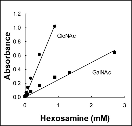 Standard curves for both hexosamines, N-acetyglucosamine (GlcNAc) and N-acetylgalactosamine (GalNAc), in the Morgan- Elson method.