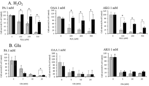 Protection of HT22 against (A) H2O2 and (B) Glu by pyruvate (PA), oxaloacetate (OAA), and α-ketoglutarate (AKG). (A) Protective effects of 1mM PA, OAA, or AKG against various concentrations of H2O2. (B) No protective effect of 1 mM PA, OAA, or AKG against high concentrations of Glu was found. White bars indicate H2O2 or Glu alone; and gray bars H2O2 + KCI (PA, OAA, or AKG). Values, presented as a percentage of the control MTT (3-(4,5-dimethylthiazol-2-yl)-2,5-diphenyl tetrazolium bromide) value (obtained in the absence of glutamate), are given as the mean ± SD (n = 4). * significantly different (p < 0.05) from samples without a KCI. KCI: Krebs cycle intermediate.