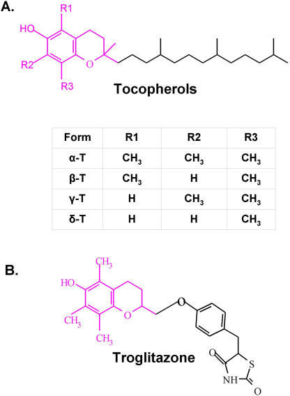 The structure comparison of the tocopherols A) with troglitazone B).