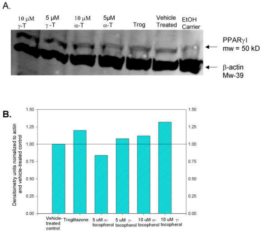 Tocopherol upregulation of PPARγ protein by Western Blot analysis of A) 24-hour tocopherol-treated SW480 nuclear extracts: lane 1 – 10 μM γ-tocopherol, lane 2 – 5 μM γ-tocopherol lane 3 – 10 μM α-tocopherol, lane 4 – 5 μM α-tocopherol, lane 5 – 100 μM troglitazone, lane 6 – blank, lane 7-ethanol carrier control.B) Bar graph of densitometries for Western Blot shown in figure 4A.