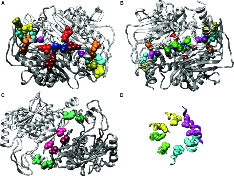 Inter-molecular interactions between coevolving residues of the chorismate synthase tetramer.(A–C) Coevolving residues are highlighted by the same hue. Light residues are from chain A. Dark residues are from chain D (panels A and B) or chain C (panel C). (B) The back side of the structure depicted in panel A. (D) A pair of coevolving residues forming a planar ring at the center of the tetramer. Each molecule of chorismate synthase is depicted in a different color.