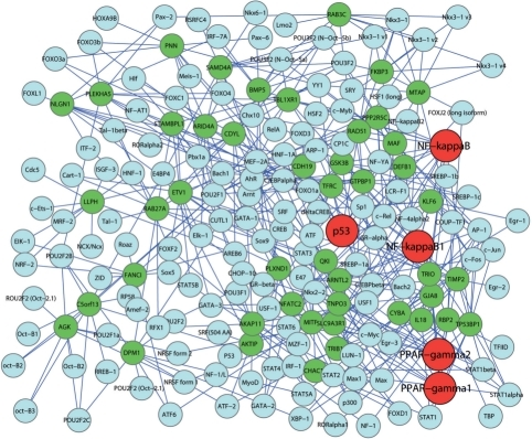 Transcriptional network of the 47 predicted driver genes. The predicted genes are marked green and their transcriptional factors are marked blue. The most enriched transcriptional factors, p53, NF-kappaB1, NF-kappaB, PPAR-gamma1and PPAR-gamma2, are marked red.