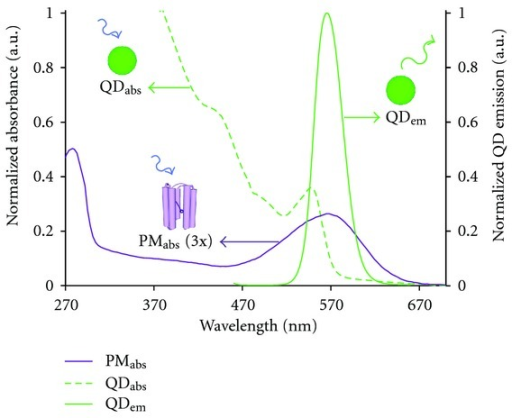 QD and bR spectra comparison at equal concentrations. QD absorption (green dashed) and emission (green solid) spectra with the bR absorption spectrum (purple solid, magnified by a factor of 3) strongly overlapping the tailored QD emission.
