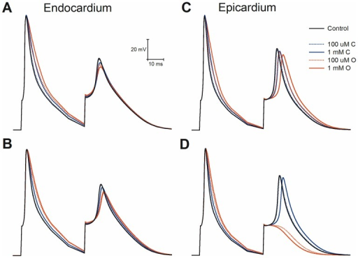 Comparison of action potentials at with S1S2 interval at 40 ms.Endocardium was stimulated at A: 1 Hz B: 10 Hz. Epicardium was stimulated at C: 1 Hz D: 10 Hz. Control, in the absence of drug is indicated by solid black line. Drug C is shown in blue, and drug O in red.