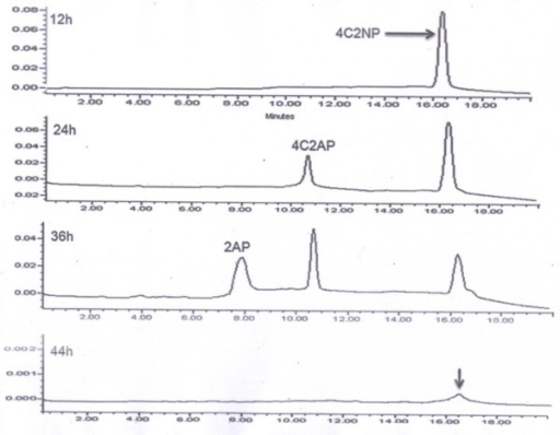 HPLC elution profile of samples of degradation of 4C2NP by Exiguobacterium sp. PMA. HPLC confirmed complete depletion of 4C2NP by Exiguobacterium sp. PMA within 44 h. Metabolite I was detected in sample of 24 and 36 h whereas metabolite 11 was detected only in the sample of 36 h.
