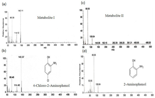 Mass spectra of metabolites and authenetic standards. (a) Metabolite I, (b) 4-Chloro-2-aminophenol (4C2AP), (c) Metabolite II, and (d) 2-Aminophenol (2AP).