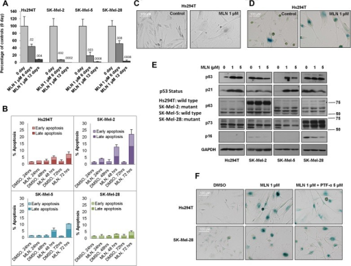 Inhibition of aurora kinases induces cellular senescence in vitro independent of p53Hs294T (p53WT), SK-Mel-2 (p53 mutant), SK-Mel-5 (p53WT) and SK-Mel-28 (p53 mutant) cells were treated with 1 µM MLN8237 for 6 or 12 days. After treatment, viable cells were counted and compared to the initial cell number. Data indicate mean values ± SD (n = 3) from one representative of three independent experiments. p-value shown represents difference between treated group and day 0 control group (Student's t-test).Cultures of Hs294T, SK-Mel-2, SK-Mel-5 and SK-Mel-28 cells were treated with MLN8237 or vehicle for indicated time points and apoptosis was analysed by FACS analysis for propidium iodide (PI) and Annexin V staining. Data indicate mean values ± SD (n = 3) from triplicate experiments.Hs294T cells were treated with 1 µM MLN8237 or vehicle for 5 days and the change in morphology was captured with an AxioVision microscope.Hs294T cells were treated with 1 µM MLN8237 for 5 days, and senescence was determined by β-galactosidase staining.Melanoma cell lines with wild-type p53 (Hs294T and SK-Mel-5) or mutated p53 (SK-Mel-2 and SK-Mel-28) were treated with 1 µM or 5 µM MLN8237 for 5 days. After treatment, p53, p63, p73, p21, p16 and GAPDH were analysed by Western blot.Hs294T and SK-Mel-28 cells were treated with 1 µM MLN8237 or vehicle in the presence or absence of the p53 inhibitor pifithrin-α (PTF-α, 5 µM) or DMSO for 5 days. After treatment, β-galactosidase staining was performed. All experiments were conducted at least three times independently with reproducible results.