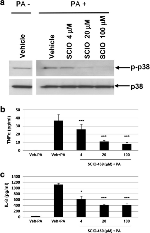 Propionibacterium acnes-induced phospho-p38 and cytokine release was inhibited by a p38α inhibitor, SCIO-469, in human epidermal equivalents. a Western blot shows that SCIO-469 suppresses P. acnes-induced phospho-p38 (p-p38) dose-dependently. b–c SCIO-469 inhibits the secretion of TNF-α (b) and IL-8 (c). Data are expressed as mean ± SD. p < 0.05 (*), p < 0.01 (**), p < 0.005 (***). PA Propionibacterium acnes, TNF tumor necrosis factor, IL interleukin