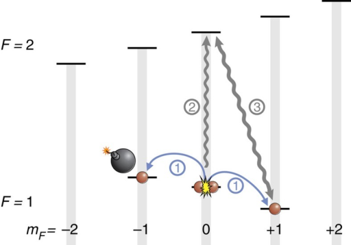 Realization of the atomic homodyning.After an evolution in the presence or absence of an absorbing object in the (1, −1) state (1), we transfer the remaining atoms in the (1, 0) state to (2, 0) with a microwave pulse (2). These atoms act as a strong coherent state for the displacement of the state in (1, −1) by a short microwave pulse (3).