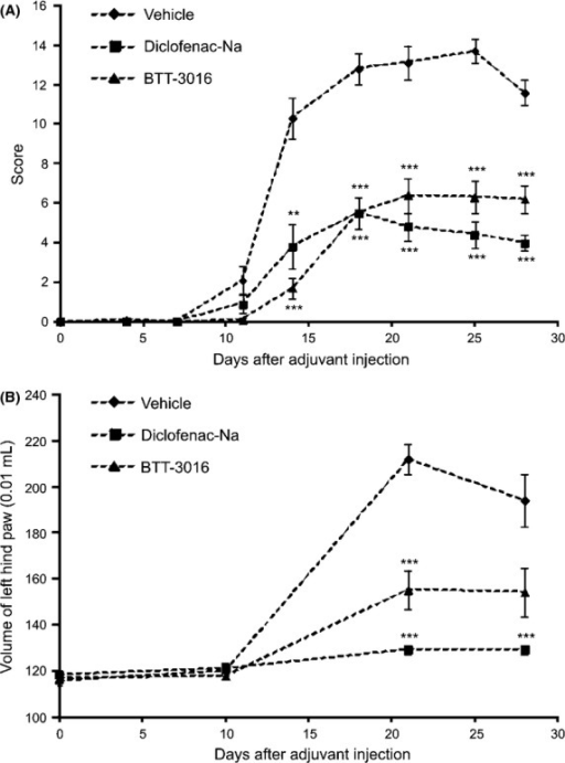 Inhibition of α2β1 integrin has anti-inflammatory effect in adjuvant-induced arthritis model. The male Lewis inbred rats were injected with 0.5 mg of killed Mycobacterium butyrium. Vehicle (n = 10), Diclofenac-Na (2 mg/kg, n = 10) and BTT-3016 (5 mg/kg, n = 10) were administrated i.p. once a day from day 1 to 27 after the challenge. The severity of the disease was determined by (A) scoring and by (B) measuring the volume of left hind paw at time points indicated. (A, B) The data are represented as mean ± SEM. **P < 0.01; ***P < 0.001 (ANOVA followed by Newman-Keuls multiple comparison test).