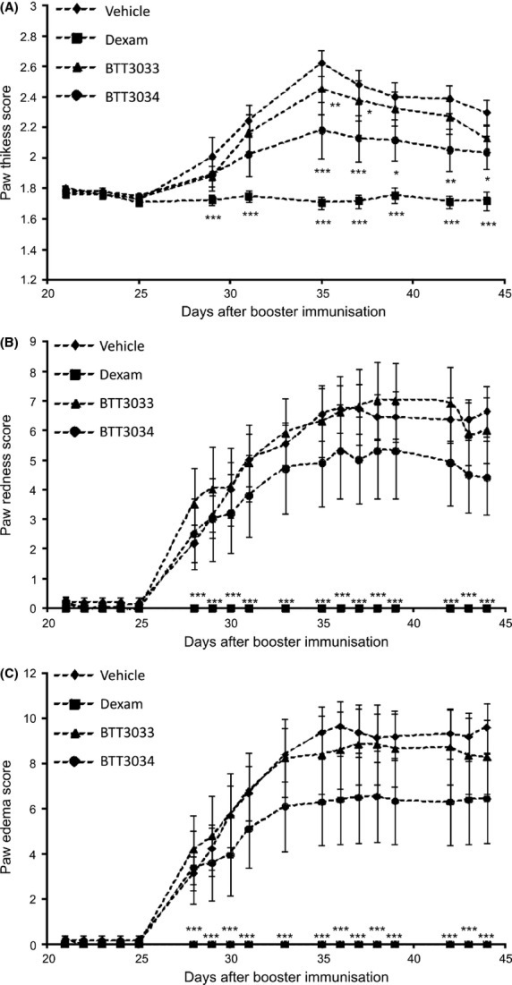 α2β1 integrin inhibitor BTT-3034 presents anti-inflammatory effect in collagen-induced arthritis model. Male DBA/1JNCrlj mice were challenged with bovine type II collagen and Freud′s adjuvant. Vehicle (n = 11), BTT-3033 (10 mg/kg, n = 10) and BTT-3034 (10 mg/kg, n = 10) were administrated orally twice a day and dexamethasone (Dexam, 0.1 mg/kg, n = 10) once a day from day 1 to 26 after the challenge. The severity of arthritis was evaluated with (A) paw thickness score, (B) paw redness score, and (C) paw edema score at time points indicated. (A–C) The data are shown as mean ± SEM. *P < 0.05; **P < 0.01; ***P < 0.001 (Two-Way ANOVA with the post hoc Tukey's test).