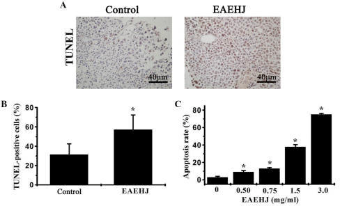 Effects of Hypericum japonicum ethyl acetate extract (EAEHJ) on cell apoptosis in a H22-bearing liver cancer mouse model. (A) At the end of the experiment, the tumor tissue samples from both the control and EAEHJ-treated groups were processed for immunohistochemical (IHC) staining using terminal deoxynucleotidyl transferase dUTP nick end labeling (TUNEL). Representative images were captured at a ×400 magnification. (B) Quantification of the IHC assay was measured as the percentage of positively-stained cells. Data are presented as the mean ± standard deviation (n=8). *P<0.01, vs. control. (C) Effects of EAEHJ on the apoptosis of HepG2 human hepatoma cells. HepG2 human hepatoma cells were collected and stained with Annexin V/propidium iodine followed by fluorescence-activated cell sorting analysis. The data are presented as the mean ± standard deviation from three independent experiments. *P<0.01, vs. the control cells.