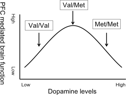 Hypothetical inverted U-shaped relationship between prefrontal cortex (PFC) brain function and dopamine levels.Intermediate COMT activity and dopamine levels present in Val/Met individuals are thought to be optimal for PFC-mediated brain function.