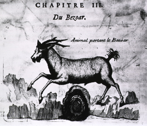 <p>Profile view of a goat against a backdrop of mountains.</p>