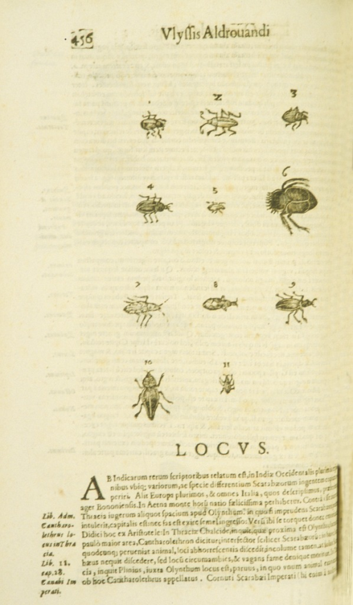 <p>Illustration of eleven types of beetles.</p>