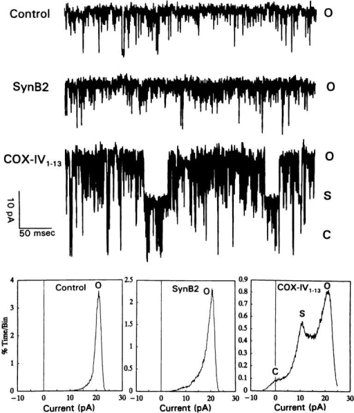 Presequence peptides specifically induce a transient  blockade of MCC conductance. The conductance of a patch excised from a proteoliposome-containing mitochondrial inner  membranes from the wild-type strain was measured at 20 mV.  The single channel current traces in the absence of peptide (control) and in the presence of 50 μM synB2 or yCOX-IV1-13 peptide  in the bath solution were band-width limited to 2 kHz. Total current amplitude diagrams and current traces show the occupancy  of open (O), substate (S) and closed (C) conductance levels. The  probability of occupying the open state was 0.9, 0.8, and 0.4 in  the absence of peptide (control), in the presence of synB2, and in  the presence of yCOX-IV1-13, respectively.