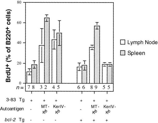 Effect of bcl-2 transgene on B cell turnover in peripheral antigen-expressing 3–83μδ Tg mice. Mice were fed BrdU-containing water  for 7 d followed by staining of isolated lymph node and spleen cells with  anti-BrdU and anti-B220 antibodies. Data are presented as percentage  (mean ± SEM) of B220+ cells that were BrdU positive. Numbers of mice  analyzed are indicated below bars. Mice lacking antigen were H-2d ND  controls.