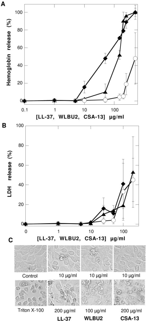 Evaluation of cell toxicity. Hemoglobin and LDH release from human red blood cells and human gastric adenocarcinoma cells (panel A and B respectively) after addition of LL-37 (circles), WLBU2 (diamonds), and CSA-13 (triangles), followed by incubation for 1 h at 37°C. Data shown are means ± SD of three experiments. Morphology of human gastric adenocarcinoma cells before (control) and after LL-37, WLBU2 and CSA-13 treatment was evaluated by phase-contrast microscopy (panel C). Data from one representative experiment are shown. Two other experiments revealed similar results.