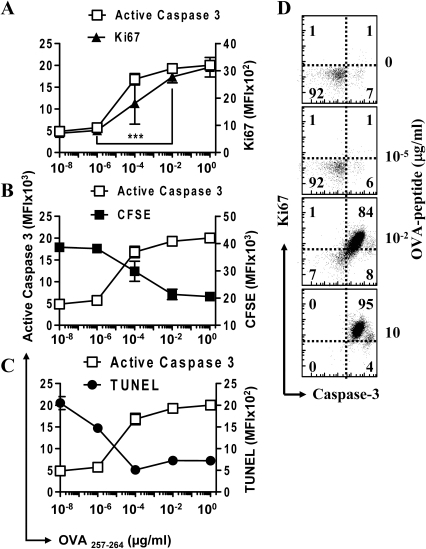 Significant increase in active caspase-3 during T cell activation correlates directly with an increase in proliferation.A single cell suspension of OT1 splenocytes, some of which were first CFSE stained, were placed in culture with varying concentrations of SIINFEKL peptide for 48 hours and analyzed by intracellular flow cytometry (n≥3). Cells were stained with anti-CD8 antibody and OVA-tetramer, then fixed and permeabilized before staining with anti- active caspase-3 antibody and Ki67. Graphs show the mean fluorescence intensity (MFI) of CD8+ OVA-tetramer+ gated cells. (A) MFI of active caspase-3 versus Ki67 show a high amount of linear correlation in their expression levels (P<0.05). There is a significant increase in the expression of both caspase-3 and Ki67 from 10−8 to 10−2 µg/mL OVA (P<0.005). (B) MFI of CFSE versus active caspase-3, inverse correlation was found to be significant (P<0.01). (C) MFI of TUNEL stain versus active caspase-3, inverse correlation was found to be significant (P<0.01). (D) Scatterplots show the relative expression of active caspase-3 versus Ki67 for gated CD8+ cells in splenocyte cultures treated for 48 hours with varying amounts of SIINFEKL peptide as shown. Data shown is representative for two repeated experiments performed in triplicate.