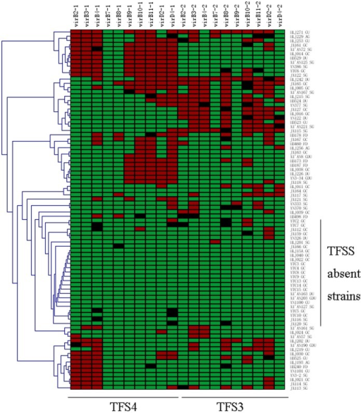 Gene content analysis of TFS4 and TFS3 in eighty-four H. pylori isolates by PCR.The presence of individual genes is indicated in red, and their absence in green. Non-specific amplicon is shown in black.