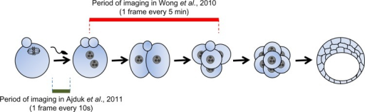 Novel methods of predicting mammalian embryo viability involving an advanced time-lapse imagingThe method described by Wong et al. involves time-lapse imaging of embryos every 5 min for several hours (from 1- to 4-cell stage) [33]. In comparison, the method established by Ajduk et al. requires a much shorter period of recording (2.5 hours for mouse embryos) but with images taken every 10 seconds [37].