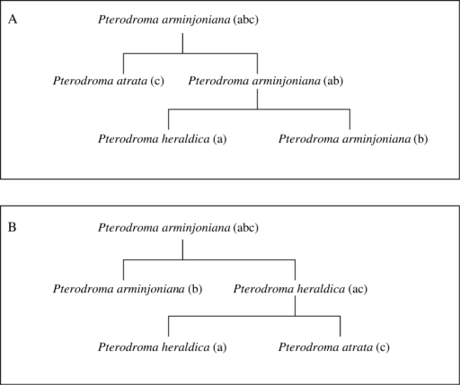 The relationships between Pterodroma arminjoniana, Pterodroma heraldica and Pterodroma atrata, with two alternative arrangements (A and B) of biological concepts found in taxonomic authorities. Concepts with the same lowercase letters in brackets in the two diagrams represent congruent circumscriptions.